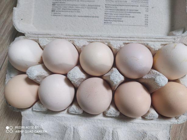 Jaja wiejskie kurze