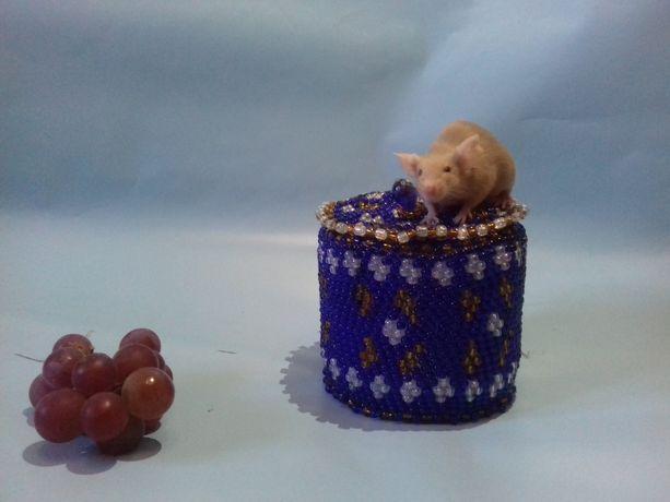 Красивые ручные золотистые(рыжие) мышки.