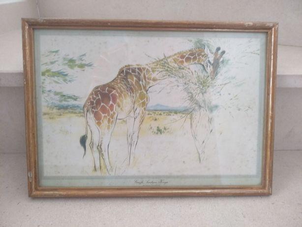 Quadro antigo com um girafa