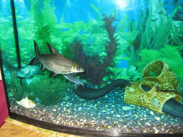Продам аквариум со всем оборудованием и рыбками.
