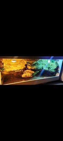 Terrarium dla agamy gekona żółwia węża kameleona legwana