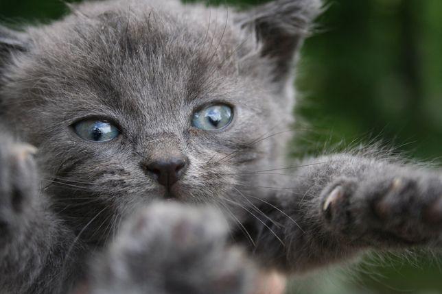 Отдам котят, отдам котенка, котик, кот