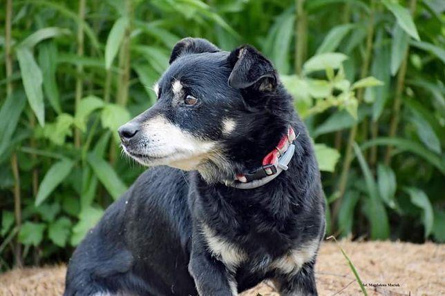 Pies po przejściach liczy na kochający dom