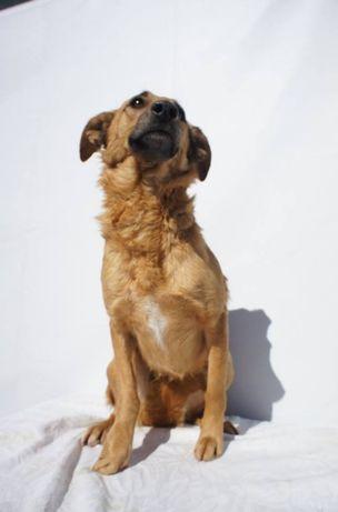 Nani - cadela médio/grande esterilizada