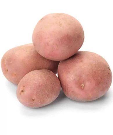 Продаю насіневу картоплю Романо