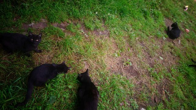 Kotek szuka cieplego zapiecka na zimę