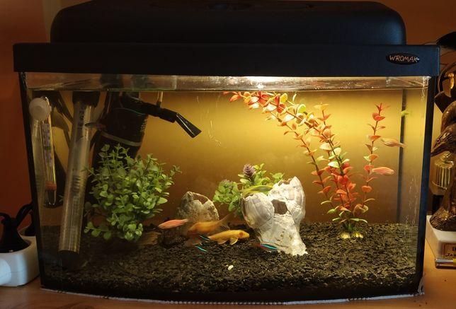 Akwarium 25l zestaw + rybki