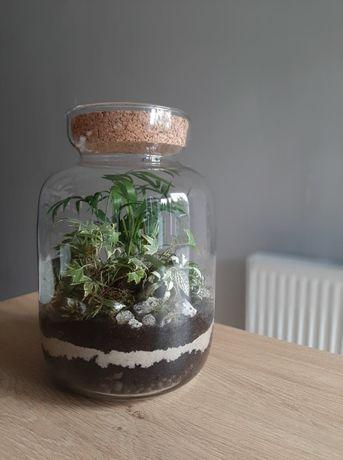 Las w słoiku/ Ekosystem w szkle- na zamówienie