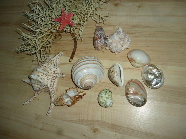 muszle morskie różne