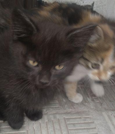 Котик та кішечка в хороші руки