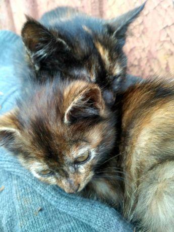 Кошенята котята безплатно кошеня котенок