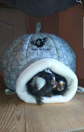 Domek dla szczurka,świnki,lotek,