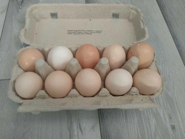 Jajka wiejskie ekologiczne