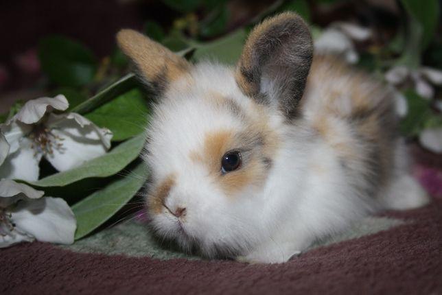 Чудненькие крольчики ждут вас