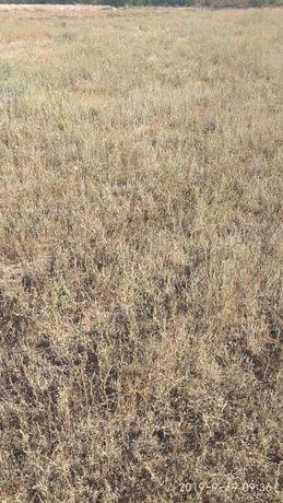 Продам земельный участок 1 га для ведения сельского господарства