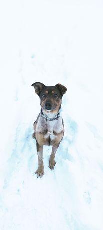 Jurek przyjacielski pies szuka swój dom na zawsze