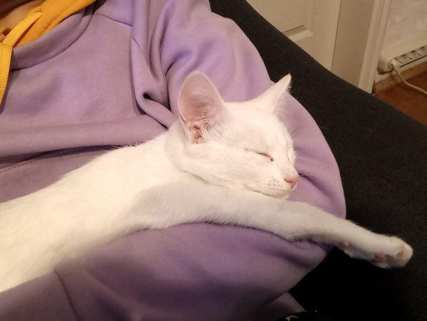 Белый котенок ( девочка-подросток)