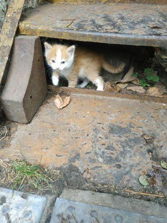 Спасите пожалуйста котика!На улице замерзает(((