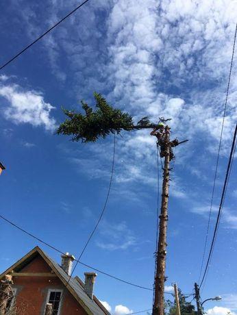 Wycinanie drzew Wycinka alpinistycznie arborysta Czyszczenie działek