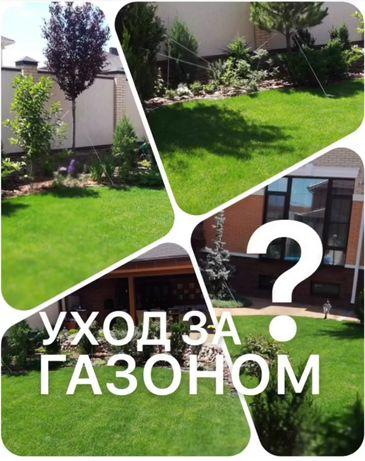 Газонная трава Бесплатно консультация по выбору семян травы для газона