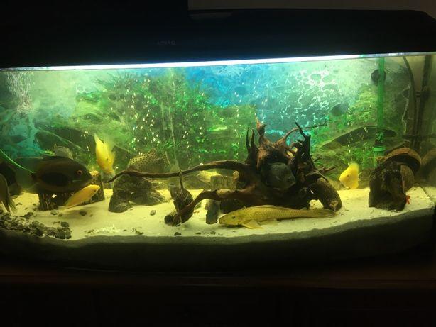 Akwarium 120x30x60  + duze ryby i akcesoria