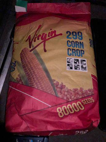 Семена кукурузы Virgin 299