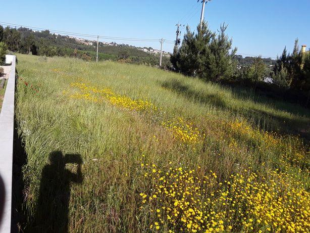 Vendo lote de terreno em Coimbra Gândara sossegado