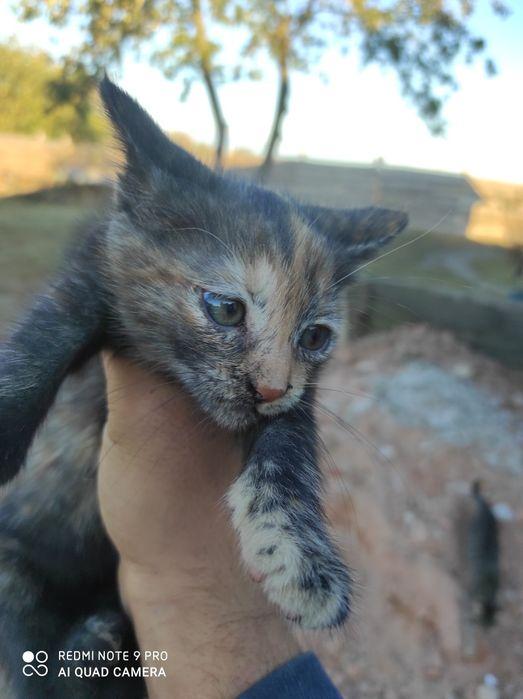 Котенок в хорошие руки Шостка - изображение 1