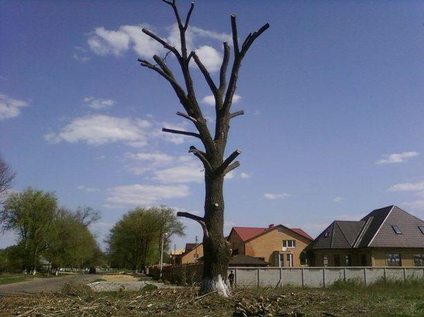 Профессиональная обрезка сада, Спил деревьев,расчистка территории