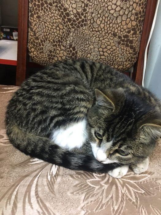 Красивый и добрый котенок Артемовск - изображение 1