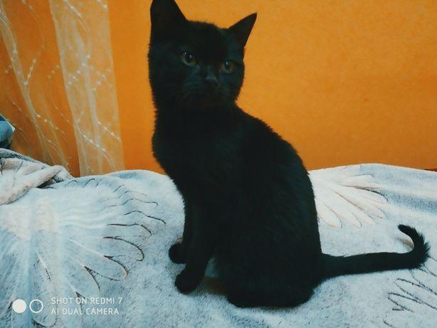 Кошеня - дівчинка
