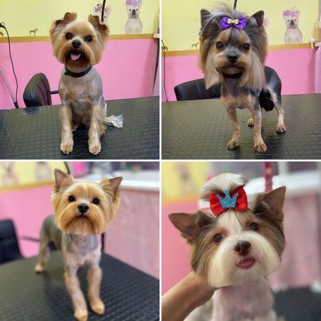 Груминг - салон Mimi pets, Стрижка собак, кошек, котов (грумер)