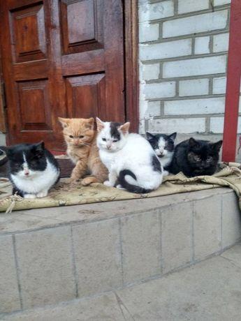 БЕЗКОШТОВНО. Кошенята шукають родину
