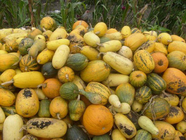 Гарбузи (тыква), картопля велика, насіннева і дрібна