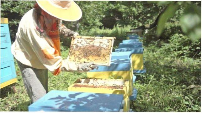 2021г. Низкие цены! Матка Карпатка Пчелиные матки.