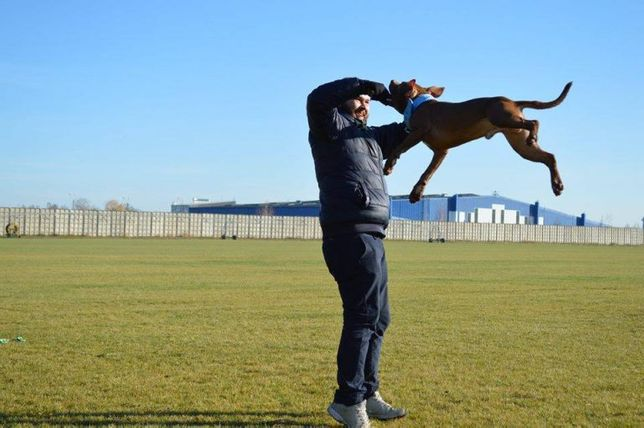 Фабрика Спортивных Собак