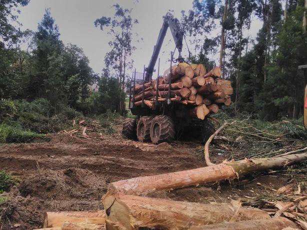 Abates e Limpezas Florestais