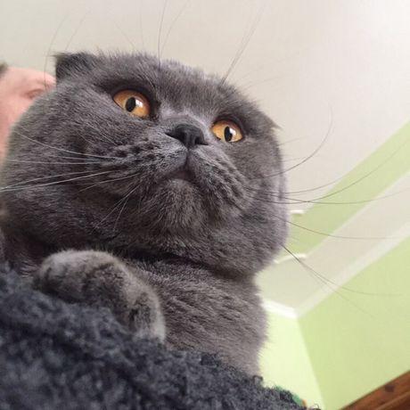 Котик шукає кішечку на в'язку