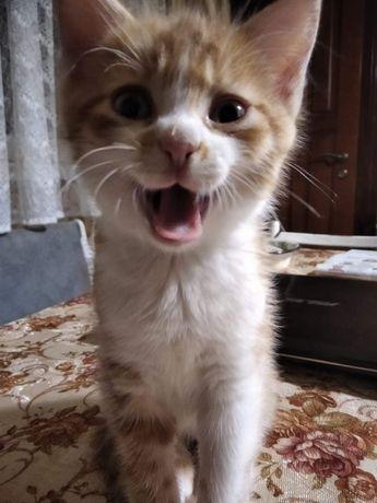 Кошеня хлопчик. Котик. Кіт.