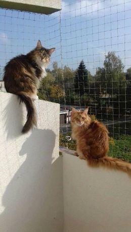siatka balkonowa zabezpieczające koty ,chroniąca przed gołębiami