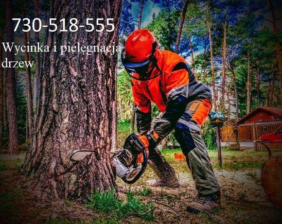 Wycinka i pielęgnacja drzew / Czyszczenie działek pod inwestycje