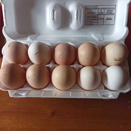 Jajka wiejskie od szczęśliwych kur