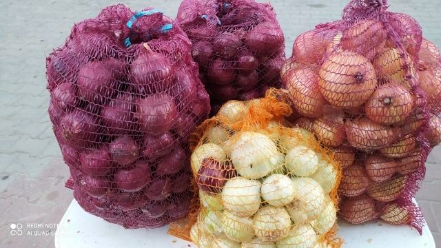 Warzywa Marchew jadalna ,Burak ćwikłowy i Cebula Czosnek harnaś