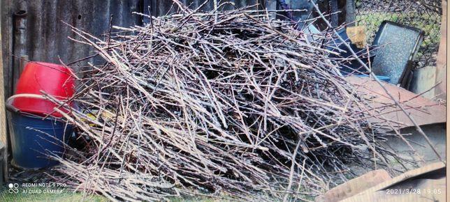 Świeżo ścięte gałązki drzew owocowych gratis do wędzarni?