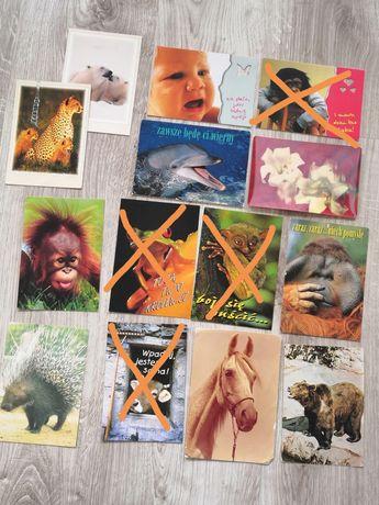 Pocztówki widokówki ze zwierzętami dziecko żaba 3d małpa koń krowa