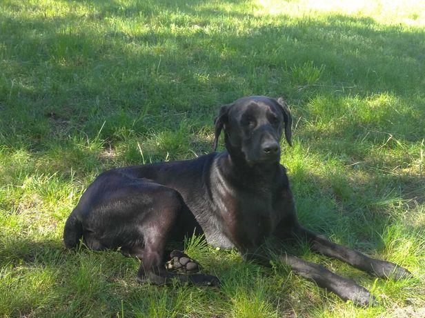 Собака кобель знайдений Хазяїн відгукнися!