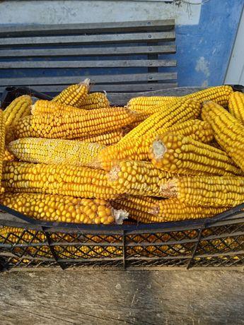 Семена совецкой кукурузы ссср