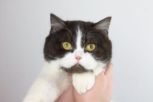 Супер красивий котик страйт