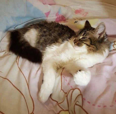 Котёнок, котята, кошечка, котик бесплтано в добрые руки, киев