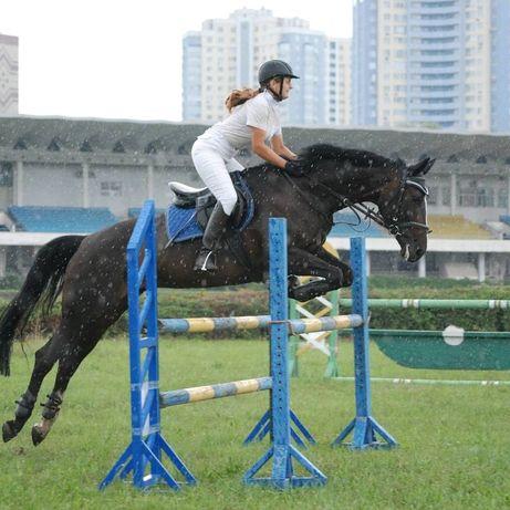 Кобыла лошадь